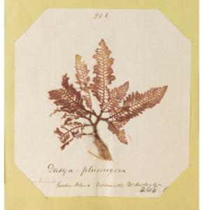 harvey1858algaespecimens-179.pdf