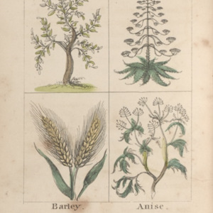 Mamma's entertaining description of the trees, plants, shrubs, & herbs, mentioned in the Holy Scriptures & the passages in which they are introduced