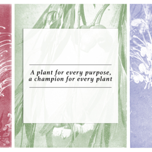 A-plant-for-every-purpose,-a-champion-for-every-plant-bannerColour.jpg