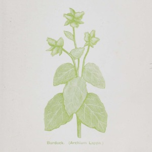 The Australian botanic guide : being a family hand-book of botanic treatment