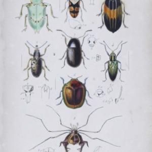 Centurie d'insectes : contenant plusieurs genres nouveax decrits dans sa collection