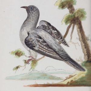 The Austral avian record : a scientific journal devoted primarily to the study of the Australian avifauna