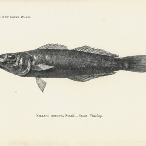 stead1908newfishes0009.jpg