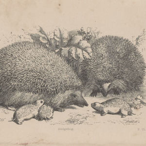 Sketches in natural history : with An essay on reason and instinct