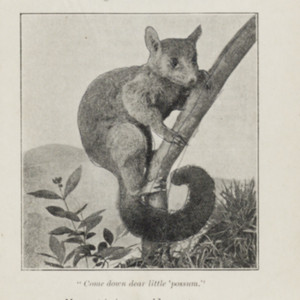 south1909adelaideillustrated0031.jpg