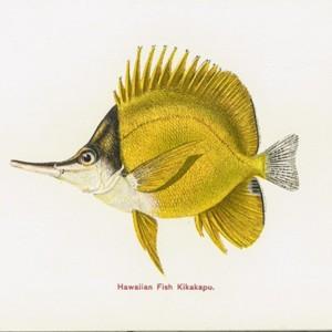 james1905hawaiianfishes0009.jpg