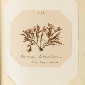 harvey1858algaespecimens-201.pdf