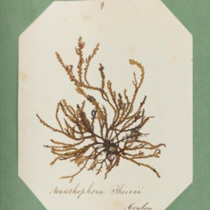 harvey1858algaespecimens-007.pdf