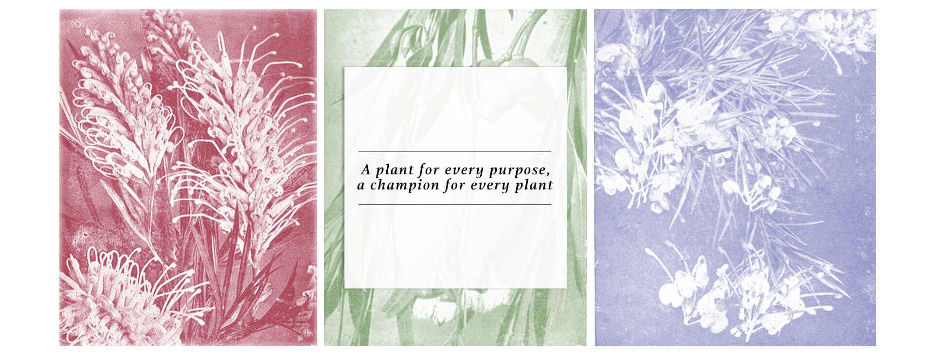 A plant for every purpose, a champion for every plant